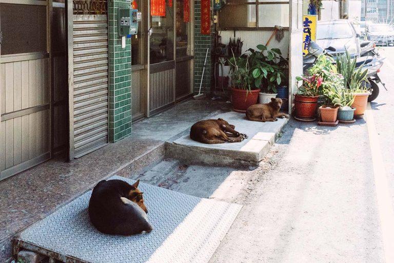 蕭麗紅_街景2