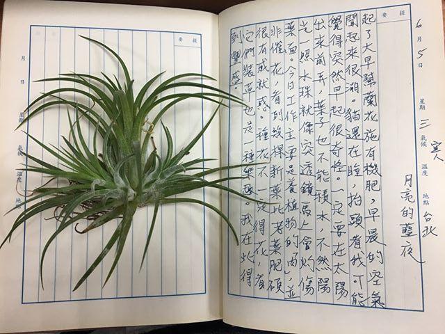 手寫日記|六月|騷夏|6/5