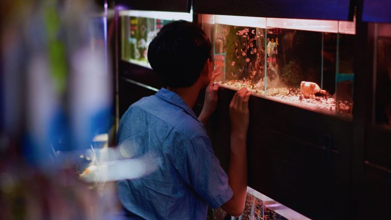 《斑馬魚》劇照。圖/台北電影節提供